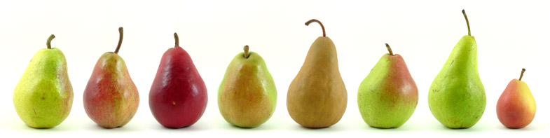 1Eight varieties of pears